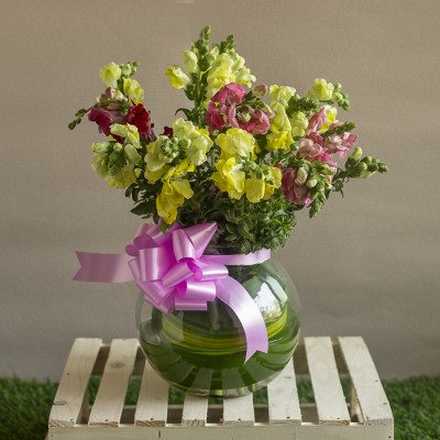 Arrangements of Snapdragon flowers in a glass pot