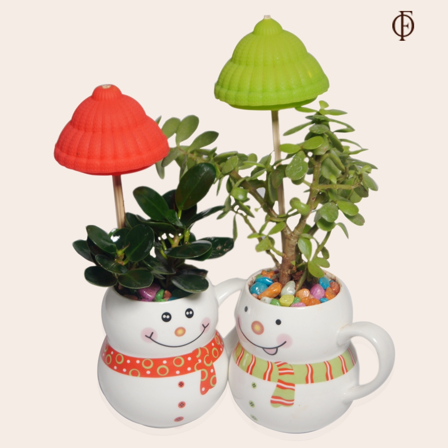 A combo Ficus Dwarf plant and Jade plant in a snowman ceramic pot