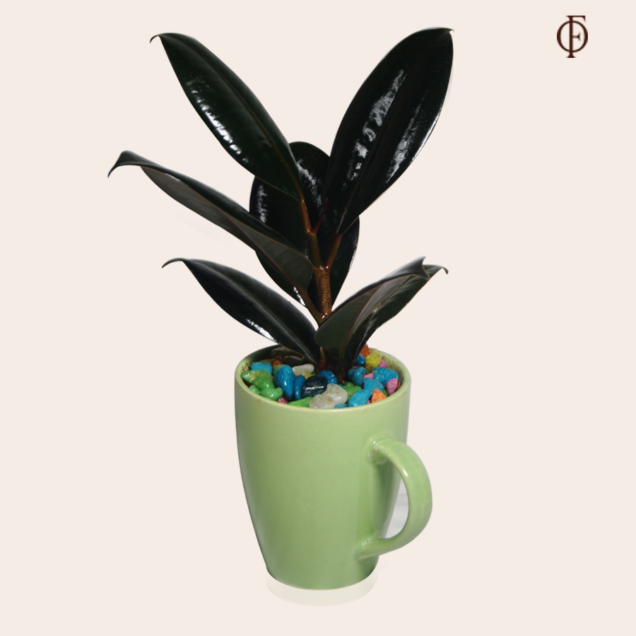 Glossy rubber plant with ceramic mug